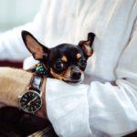 WatchDog? More like Lap Dog.